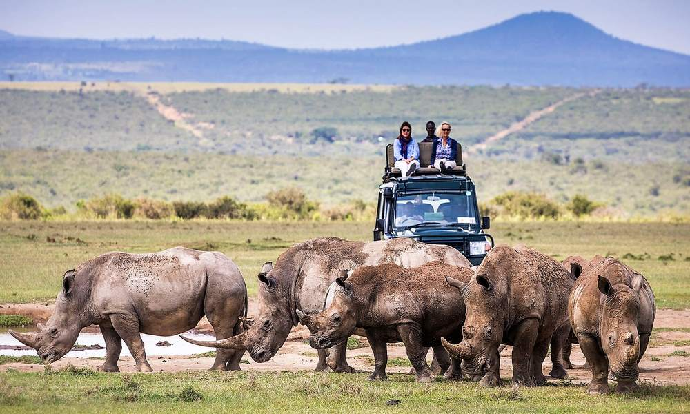 Image result for Rhinos at Solio Reserve, Kenya